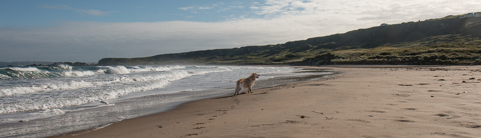 Sheeba am Strand in Irland